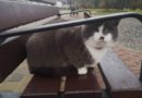 Бродившего в парке кота Гомера отправят в деревню