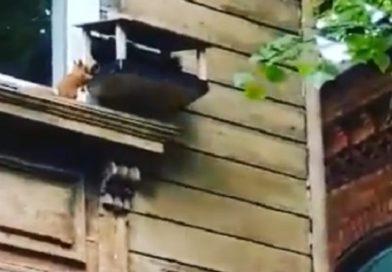 "Приморский парк: ""Птички уже не те… 🙂"" (видео)"