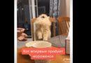 Кот впервые пробует мороженое (смешное видео)
