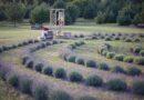 Лавандовое поле недалеко от Гробини: гостей ждут по вторникам и пятницам