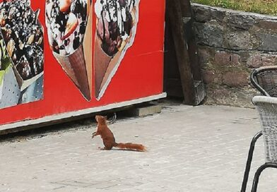 Необычный посетитель заглянул в лиепайское кафе (фото)