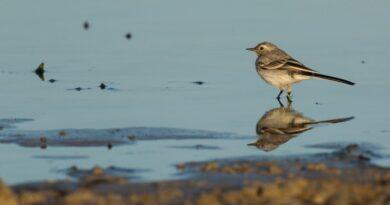 В природном парке Папе отметят Дни птиц