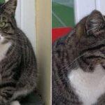 В Тосмаре к магазину прибился кот: ночью морозы – животному нужен дом