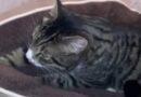 Котик нашел дом! Спасибо всем, кто делился (видео)