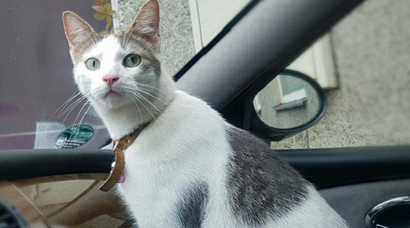 В юго-западном районе Лиепаи пропал кот