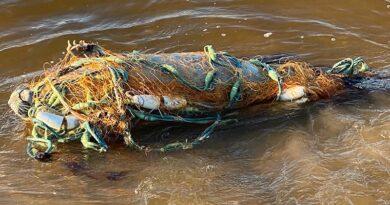 Спасатели освободили запутавшегося в сетях тюленя (фото)