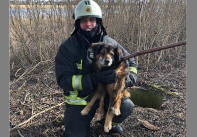 Пожарные-спасатели достали провалившуюся в колодец собаку
