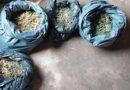 Полиция во время обыска обнаружила более 1,5 кг марихуаны