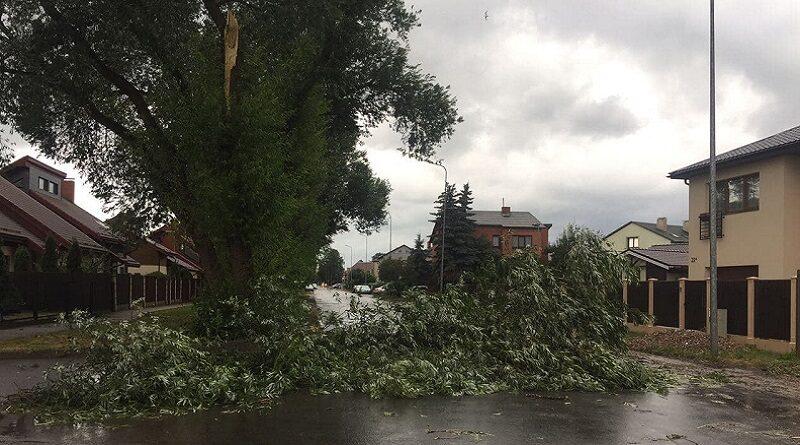 Лиепая: дорогу перегородили упавшие ветки дерева (фото, видео)