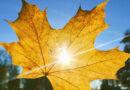 Синоптики озвучили прогнозы на начало октября