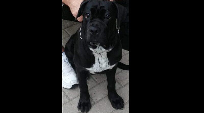 Лиепая: на улице Алдару пропала собака